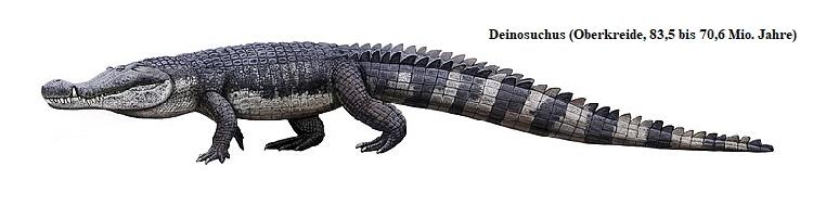Evolution der Krokodile: Zeichnung der paläontologischen Lebendkonstruktion eines Deinosuchus - Frappierende Ähnlichkeit mit den oben gezeigten Fotografien der Leistenkrokodile.