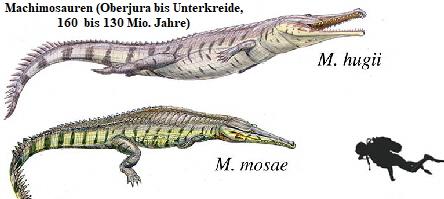 Zeichnung der paläontologischen Lebendkonstruktion von Machimosauren - Frappierende Ähnlichkeit mit den oben gezeigten Fotografien der Leistenkrokodile.