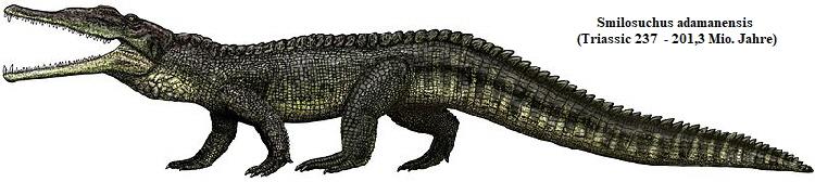 Die Evolution der Krokodile: Zeichnung der paläontologischen Lebendkonstruktion eines Smilosuchus adamenensis - Frappierende Ähnlichkeit mit den oben gezeigten Fotografien der Leistenkrokodile.
